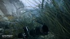 Sniper: Ghost Warrior 3 (2017 video game)